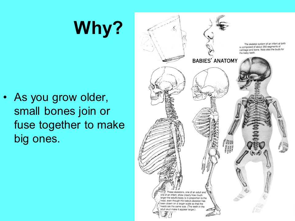 Why? As you grow older, small bones join or fuse together to make big ones.
