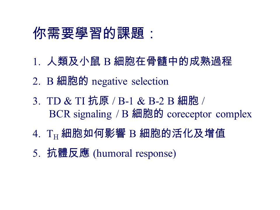 你需要學習的課題: 1. 人類及小鼠 B 細胞在骨髓中的成熟過程 2.B 細胞的 negative selection 3.TD & TI 抗原 / B-1 & B-2 B 細胞 / BCR signaling / B 細胞的 coreceptor complex 4.T H 細胞如何影響 B 細胞