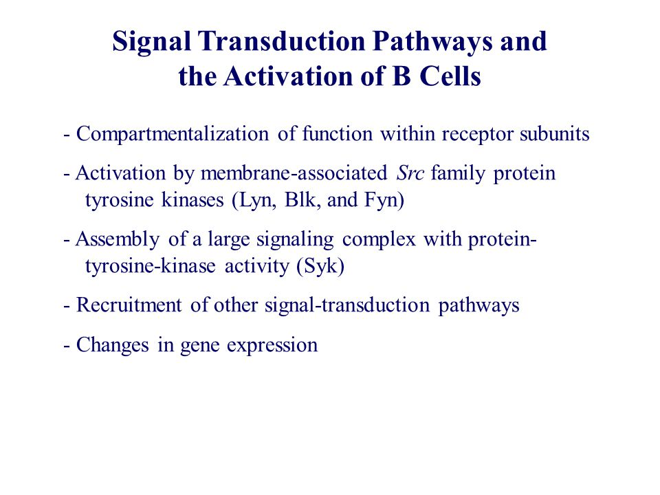 Signal Transduction Pathways and the Activation of B Cells - Compartmentalization of function within receptor subunits - Activation by membrane-associ