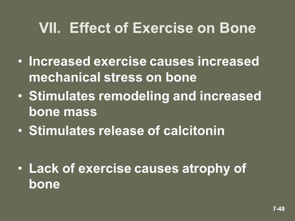 VII. Effect of Exercise on Bone Increased exercise causes increased mechanical stress on bone Stimulates remodeling and increased bone mass Stimulates