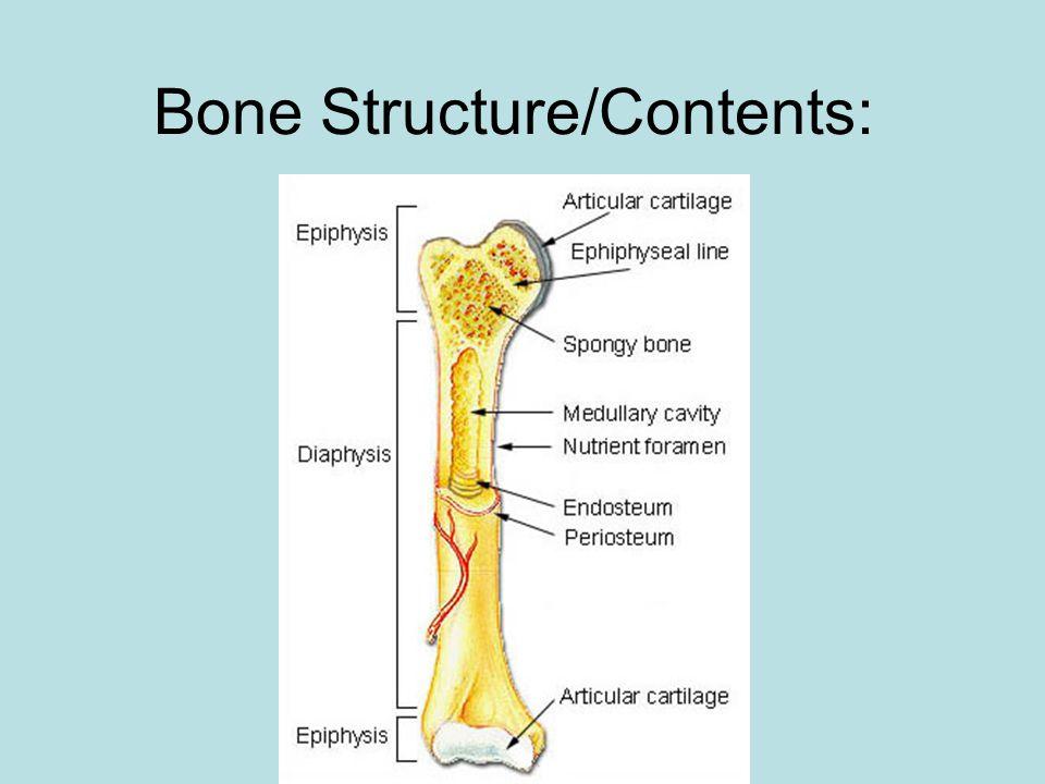 Bone Structure/Contents: