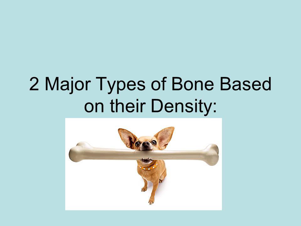 2 Major Types of Bone Based on their Density: