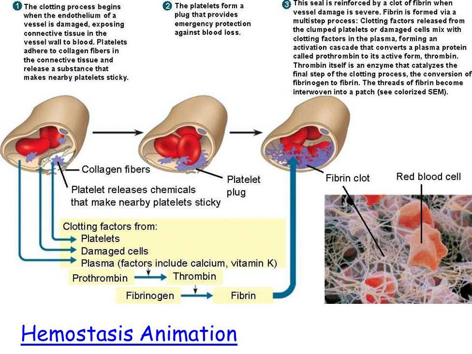 Hemostasis Animation