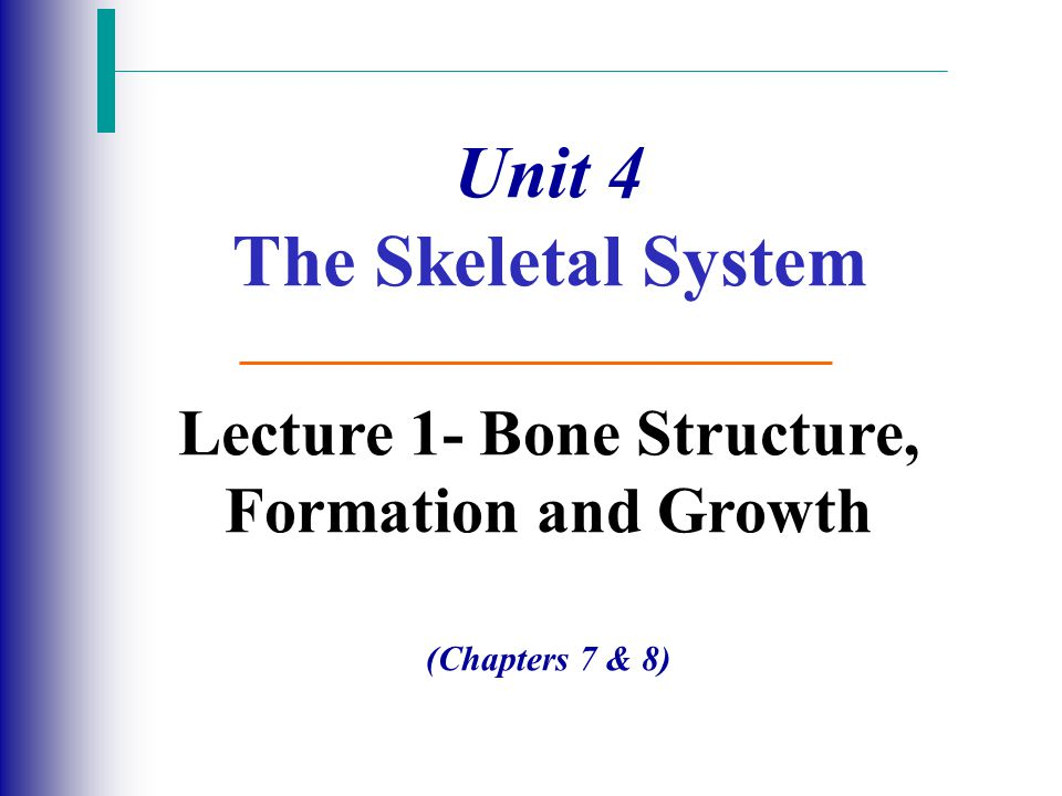 Unit 4 The Skeletal System Lecture 1- Bone Structure, Formation and Growth (Chapters 7 & 8)