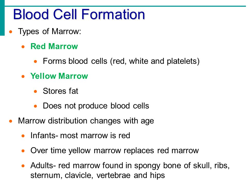 Blood Cell Formation  Types of Marrow:  Red Marrow  Forms blood cells (red, white and platelets)  Yellow Marrow  Stores fat  Does not produce bl