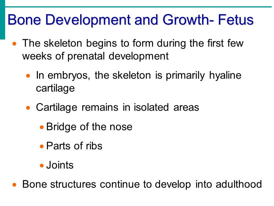 Bone Development and Growth- Fetus  The skeleton begins to form during the first few weeks of prenatal development  In embryos, the skeleton is prim