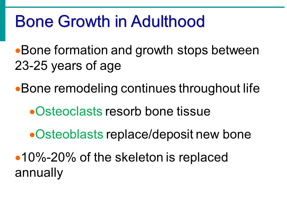 Bone Growth in Adulthood  Bone formation and growth stops between 23-25 years of age  Bone remodeling continues throughout life  Osteoclasts resorb