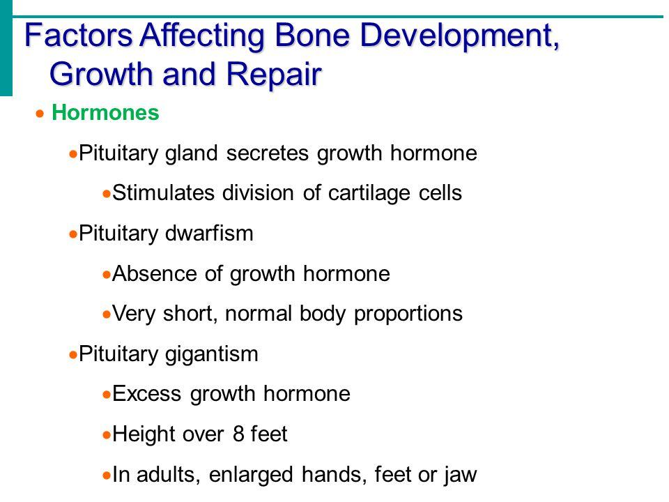 Factors Affecting Bone Development, Growth and Repair  Hormones  Pituitary gland secretes growth hormone  Stimulates division of cartilage cells 