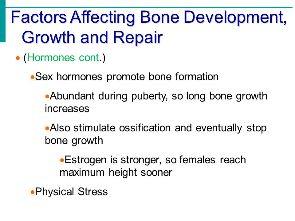 Factors Affecting Bone Development, Growth and Repair  (Hormones cont.)  Sex hormones promote bone formation  Abundant during puberty, so long bone