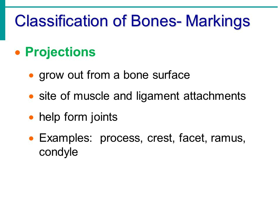 Classification of Bones- Markings  Openings  Hollows, cavities or passageways  allow blood vessels and nerves to pass through  Examples: sinus, meatus, foramen, groove, fissure  Depressions  Indentations  articulates with a process  Examples: fossa