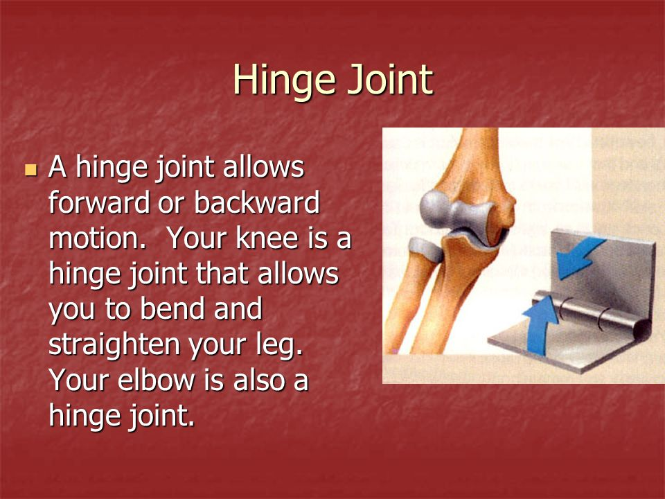 Hinge Joint A hinge joint allows forward or backward motion. Your knee is a hinge joint that allows you to bend and straighten your leg. Your elbow is