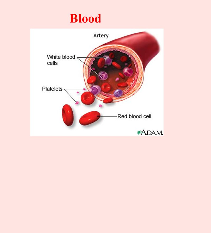 made in bone marrow: B-lymphocytes - oversee immunity of bodies humors (fluids) -mature in bone marrow T-lymphocytes - arise from cells that migrate to thymus for maturity (2-3 days) regulated by thymosin hormone -circulate through body - go after pathogens infected cells both of these migrate via blood to lymph nodes, spleen and other lymphoid tissues