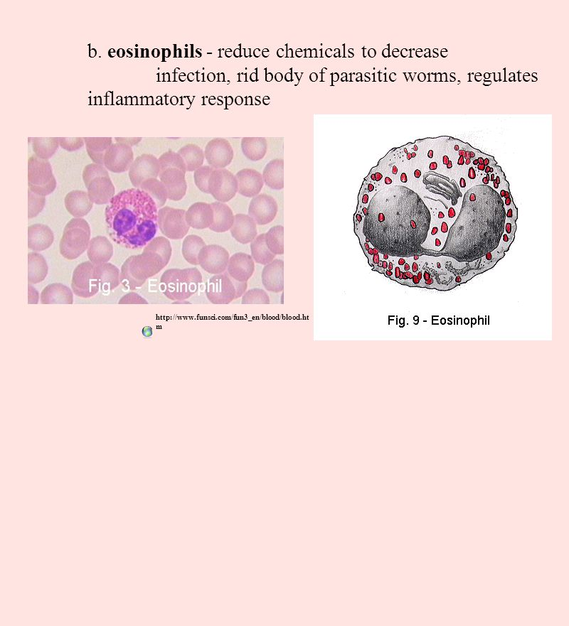 b. eosinophils - reduce chemicals to decrease infection, rid body of parasitic worms, regulates inflammatory response http://www.funsci.com/fun3_en/bl