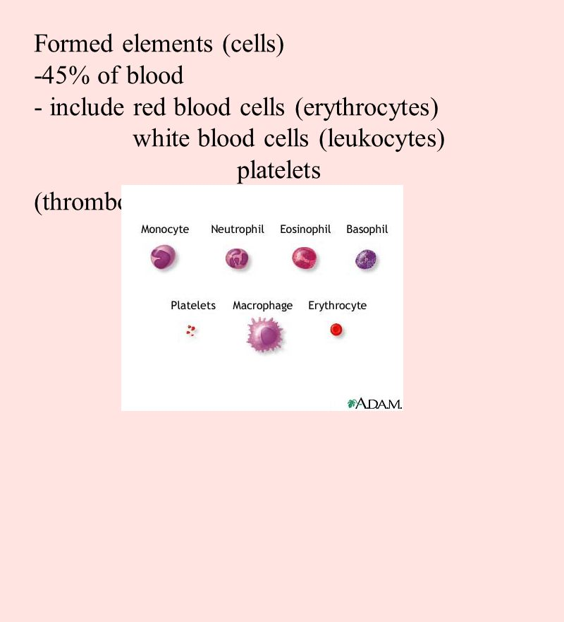 Formed elements (cells) -45% of blood - include red blood cells (erythrocytes) white blood cells (leukocytes) platelets (thrombocytes)