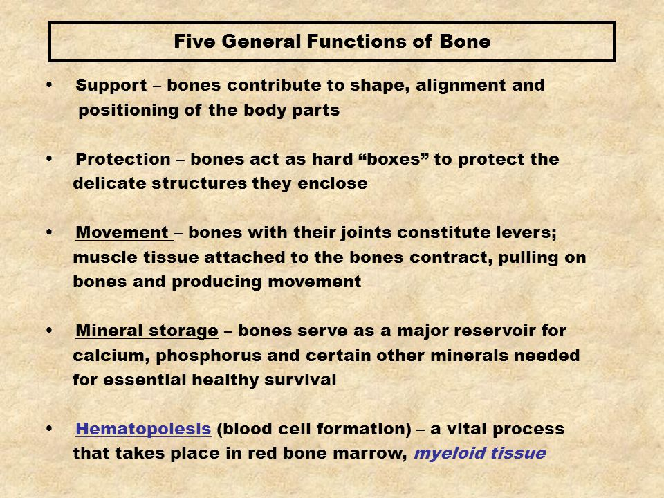Structurally, there are four types of bones: Long bones Short bones Flat bones Irregular bones The structural function of a bone is determined by its size, shape, location, appearance and constitutional makeup
