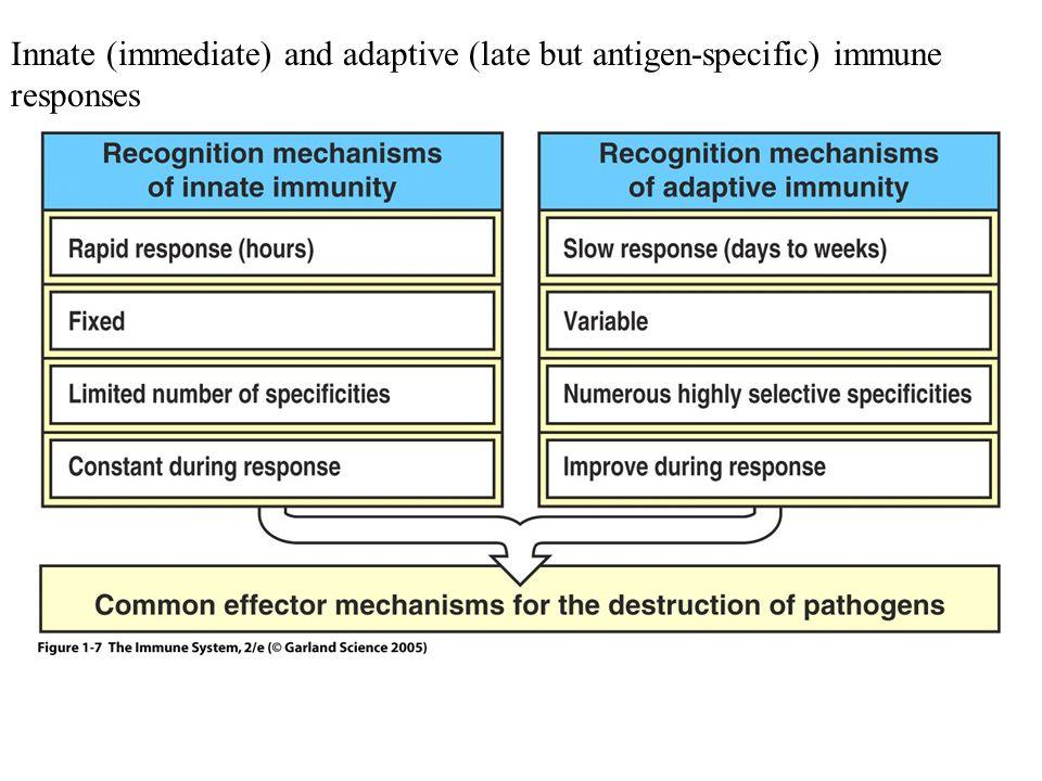 Figure 1-7 Innate (immediate) and adaptive (late but antigen-specific) immune responses