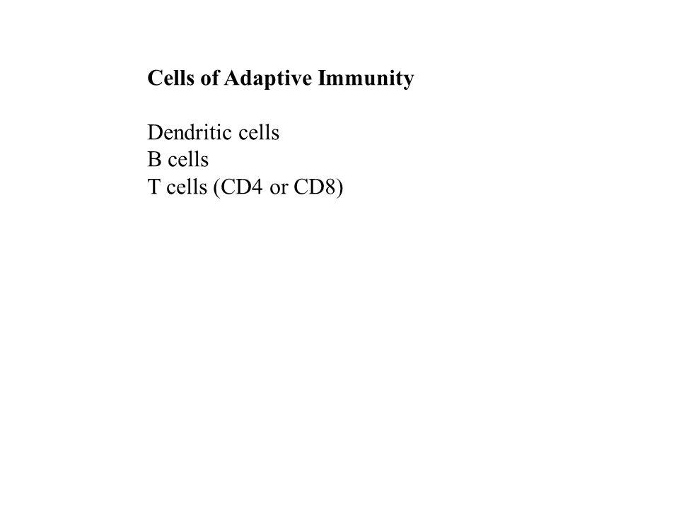 Cells of Adaptive Immunity Dendritic cells B cells T cells (CD4 or CD8)