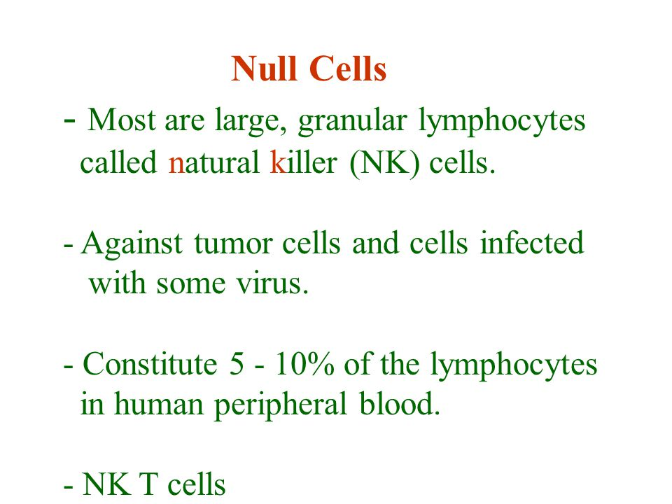 Null Cells - Most are large, granular lymphocytes called natural killer (NK) cells.