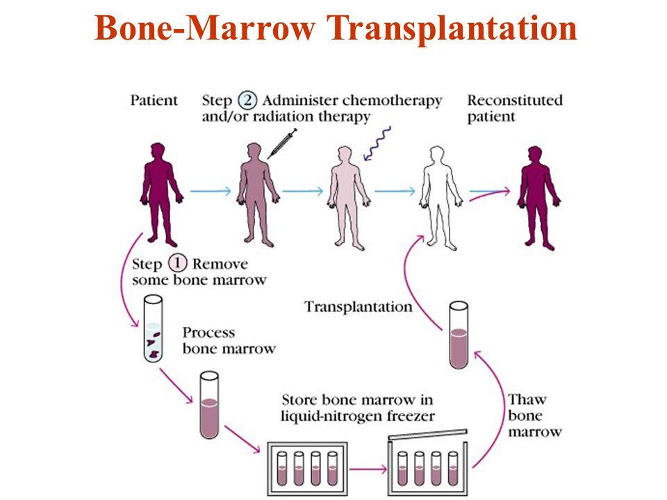 Bone-Marrow Transplantation
