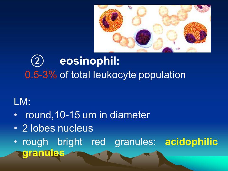 ② eosinophil : 0.5-3% of total leukocyte population LM: round,10-15 um in diameter 2 lobes nucleus rough bright red granules: acidophilic granules
