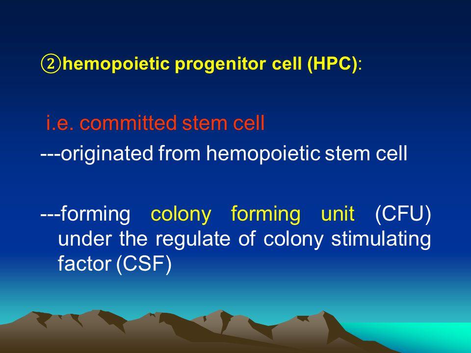② hemopoietic progenitor cell (HPC): i.e.