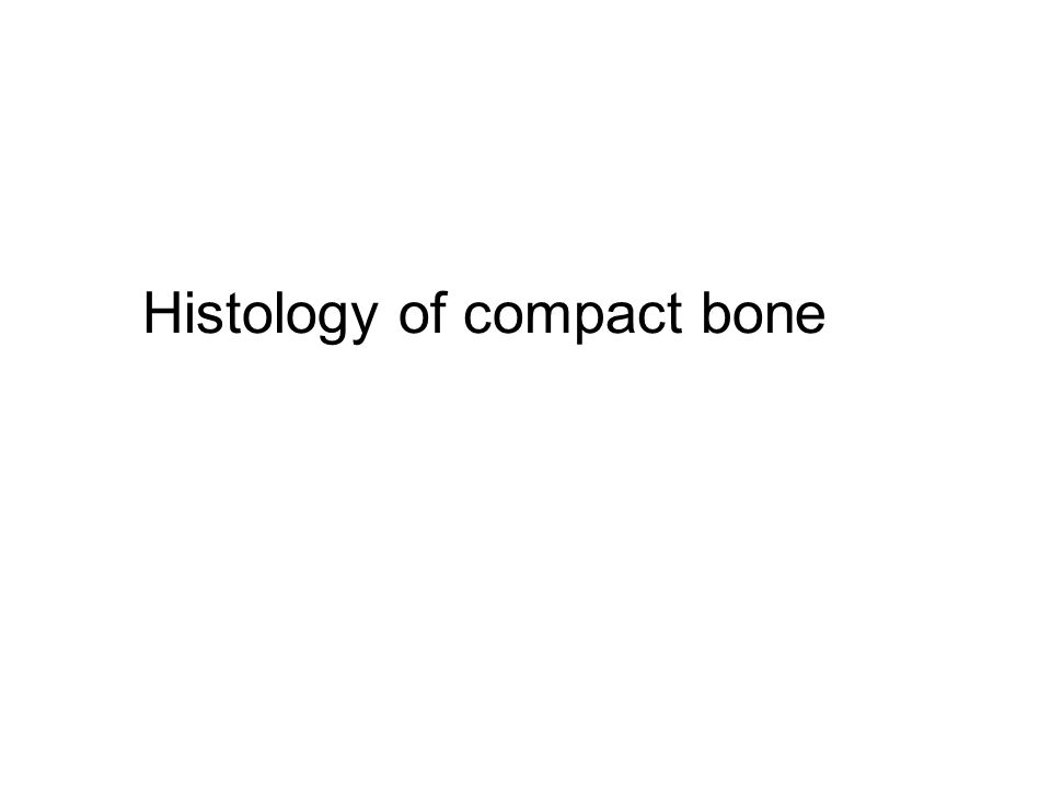 Histology of compact bone