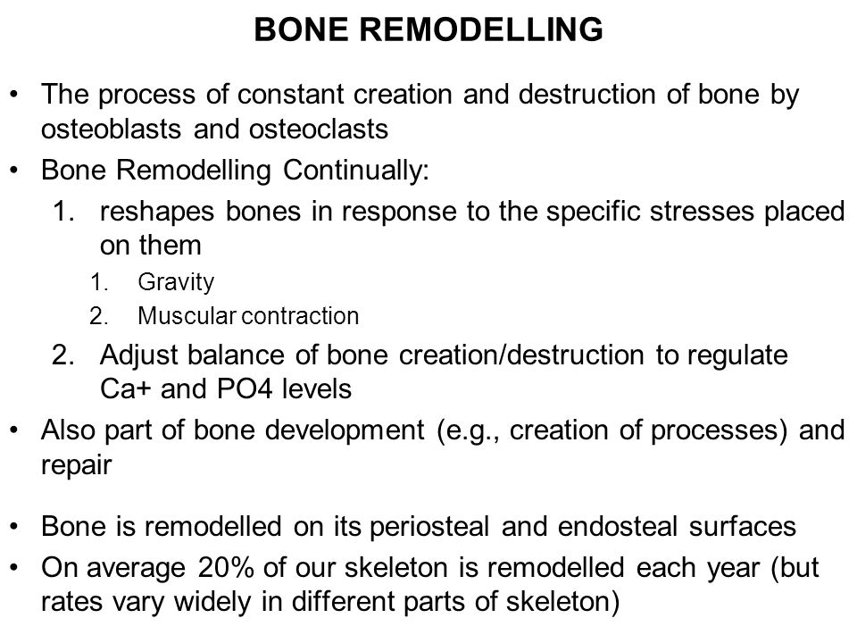 BONE REMODELLING The process of constant creation and destruction of bone by osteoblasts and osteoclasts Bone Remodelling Continually: 1.reshapes bones in response to the specific stresses placed on them 1.Gravity 2.Muscular contraction 2.Adjust balance of bone creation/destruction to regulate Ca+ and PO4 levels Also part of bone development (e.g., creation of processes) and repair Bone is remodelled on its periosteal and endosteal surfaces On average 20% of our skeleton is remodelled each year (but rates vary widely in different parts of skeleton)