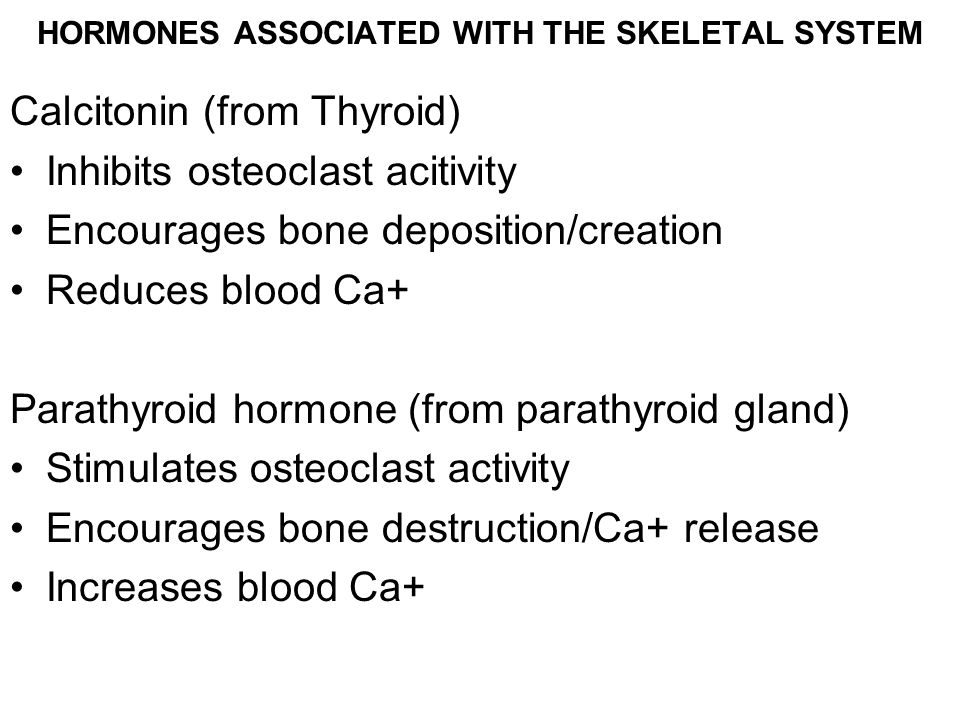 HORMONES ASSOCIATED WITH THE SKELETAL SYSTEM Calcitonin (from Thyroid) Inhibits osteoclast acitivity Encourages bone deposition/creation Reduces blood Ca+ Parathyroid hormone (from parathyroid gland) Stimulates osteoclast activity Encourages bone destruction/Ca+ release Increases blood Ca+