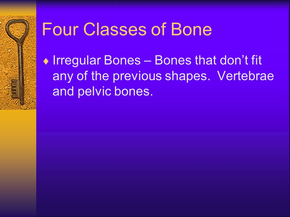 Four Classes of Bone  Irregular Bones – Bones that don't fit any of the previous shapes. Vertebrae and pelvic bones.