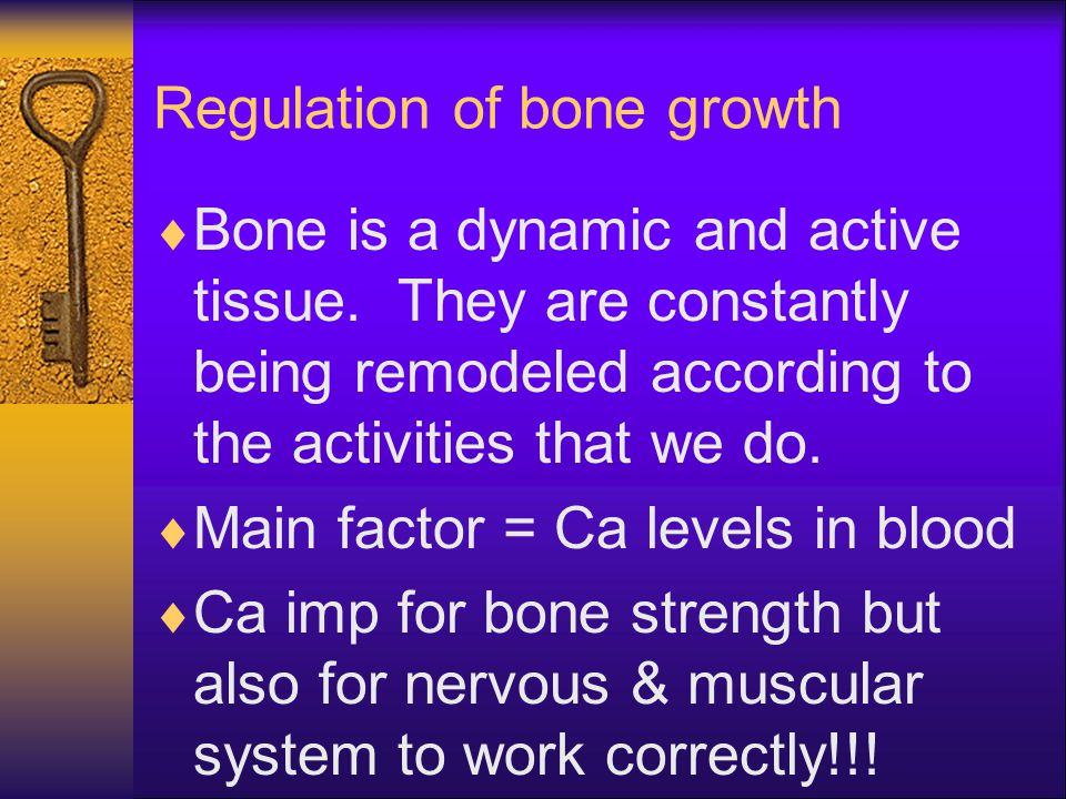 Regulation of bone growth  Bone is a dynamic and active tissue. They are constantly being remodeled according to the activities that we do.  Main fa