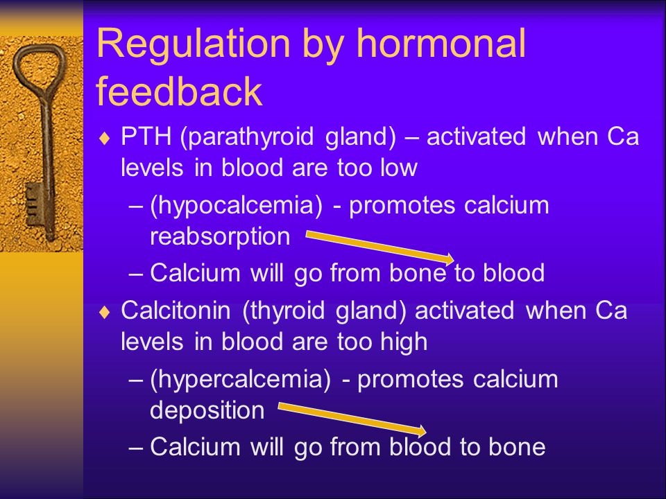 Regulation by hormonal feedback  PTH (parathyroid gland) – activated when Ca levels in blood are too low –(hypocalcemia) - promotes calcium reabsorpt