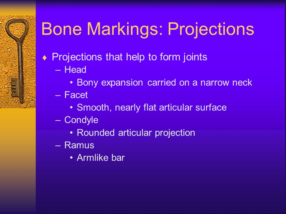 Structure of Bones  Two layers.The external layer that appears smooth and solid is compact bone.