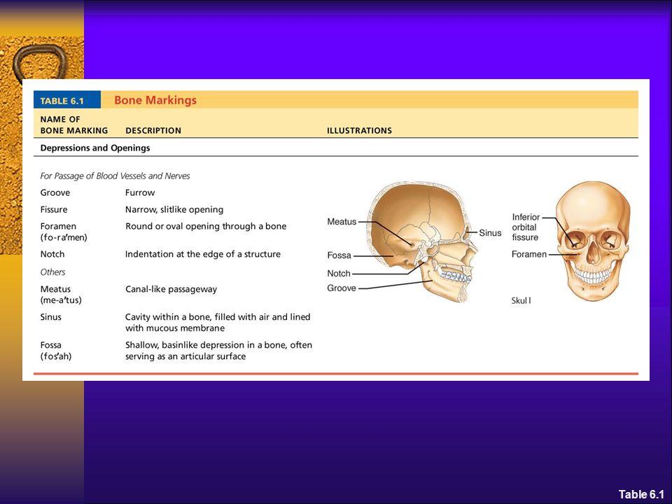 Spiral fractures