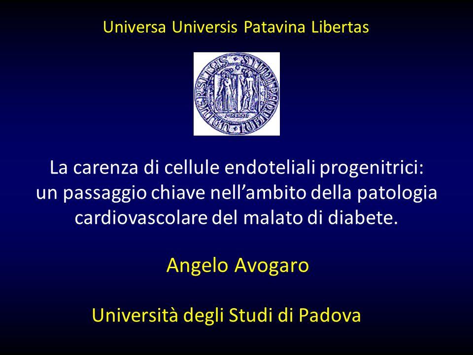 Angelo Avogaro Università degli Studi di Padova La carenza di cellule endoteliali progenitrici: un passaggio chiave nell'ambito della patologia cardiovascolare del malato di diabete.