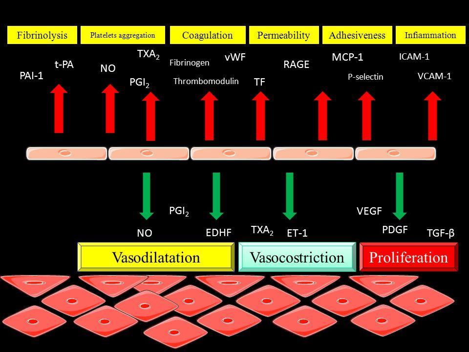 Fibrinolysis Platelets aggregation CoagulationPermeabilityAdhesiveness Infiammation PAI-1 t-PA NO PGI 2 TXA 2 Fibrinogen Thrombomodulin vWF TF RAGE MCP-1 P-selectin ICAM-1 VCAM-1 NO PGI 2 EDHF TXA 2 ET-1 VEGF PDGF TGF-β Vasodilatation Vasocostriction Proliferation