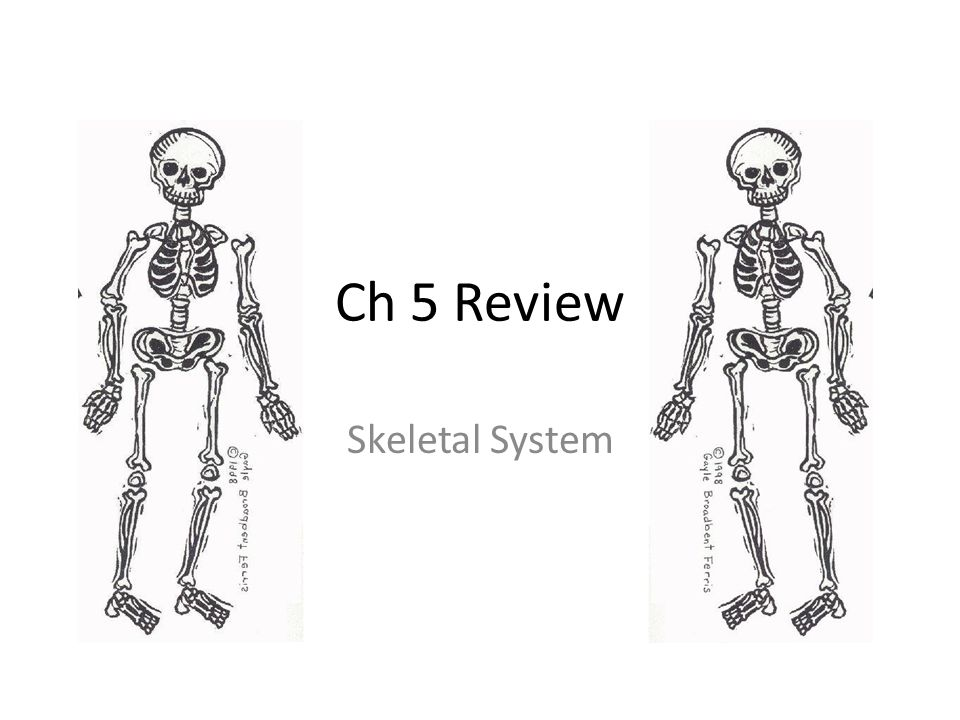 Ch 5 Review Skeletal System