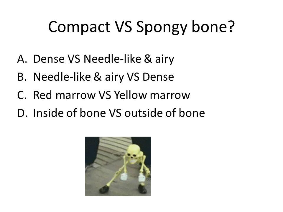Compact VS Spongy bone.