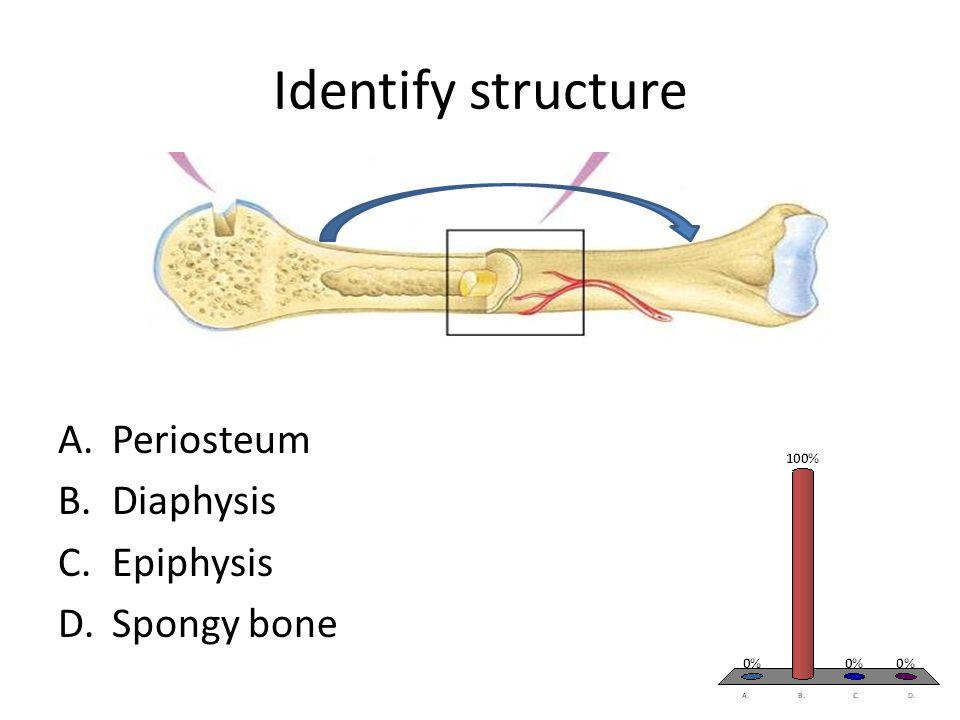 Identify structure A.Periosteum B.Diaphysis C.Epiphysis D.Spongy bone