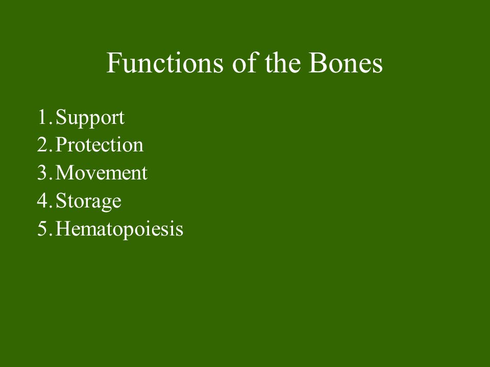 Functions of the Bones 1.Support 2.Protection 3.Movement 4.Storage 5.Hematopoiesis