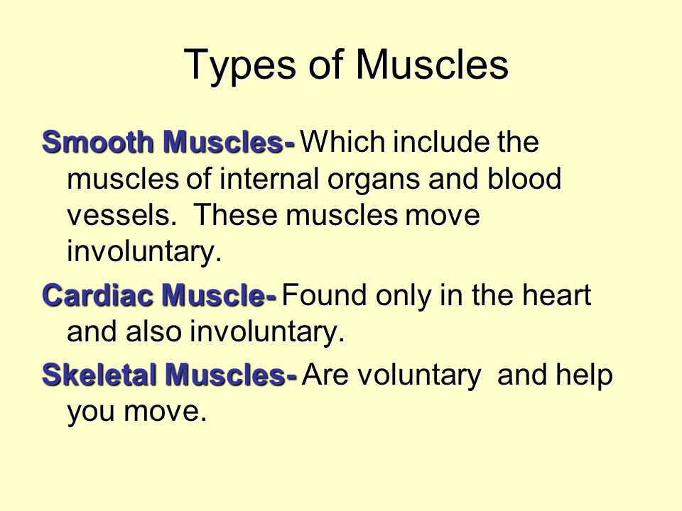 Types of Muscles Types of Muscles Smooth Muscles- Which include the muscles of internal organs and blood vessels. These muscles move involuntary. Card