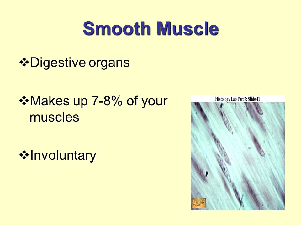 Smooth Muscle  Digestive organs  Makes up 7-8% of your muscles  Involuntary