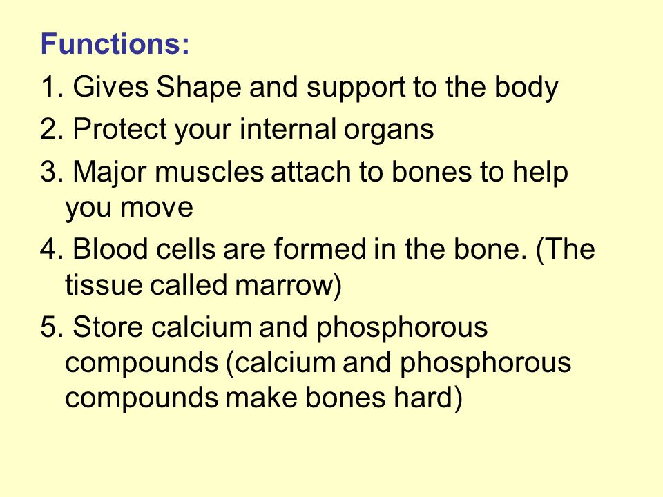 Functions: 1.Gives Shape and support to the body 2.