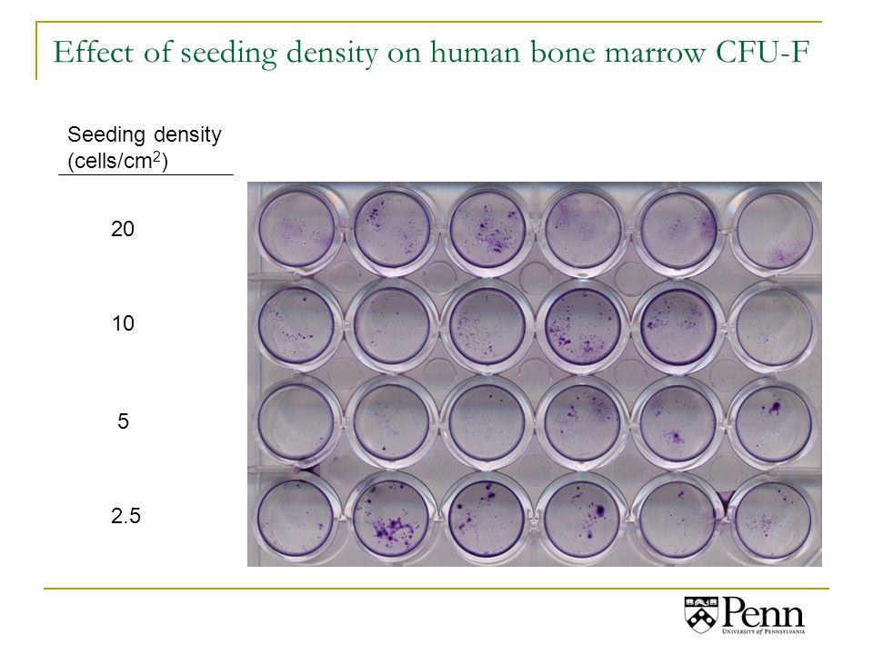 Effect of seeding density on human bone marrow CFU-F Seeding density (cells/cm 2 ) 20 10 5 2.5
