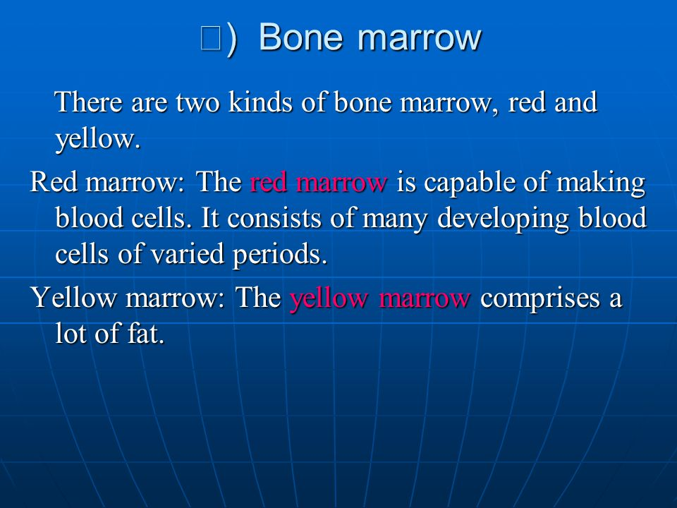 Ⅲ ) Bone marrow There are two kinds of bone marrow, red and yellow. There are two kinds of bone marrow, red and yellow. Red marrow: The red marrow is