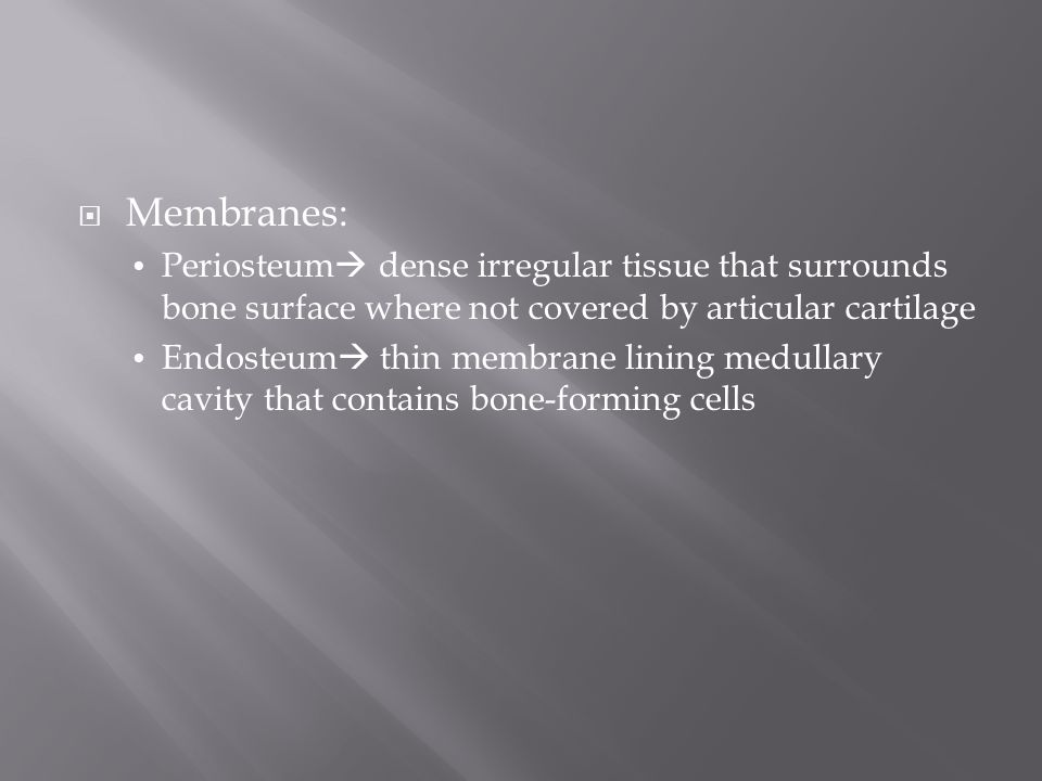  Membranes: Periosteum  dense irregular tissue that surrounds bone surface where not covered by articular cartilage Endosteum  thin membrane lining medullary cavity that contains bone-forming cells