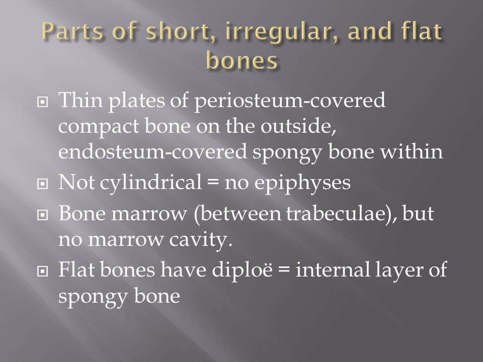  Thin plates of periosteum-covered compact bone on the outside, endosteum-covered spongy bone within  Not cylindrical = no epiphyses  Bone marrow (between trabeculae), but no marrow cavity.
