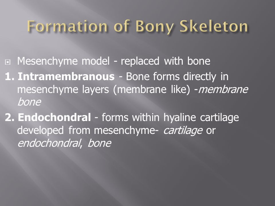  Mesenchyme model - replaced with bone 1.