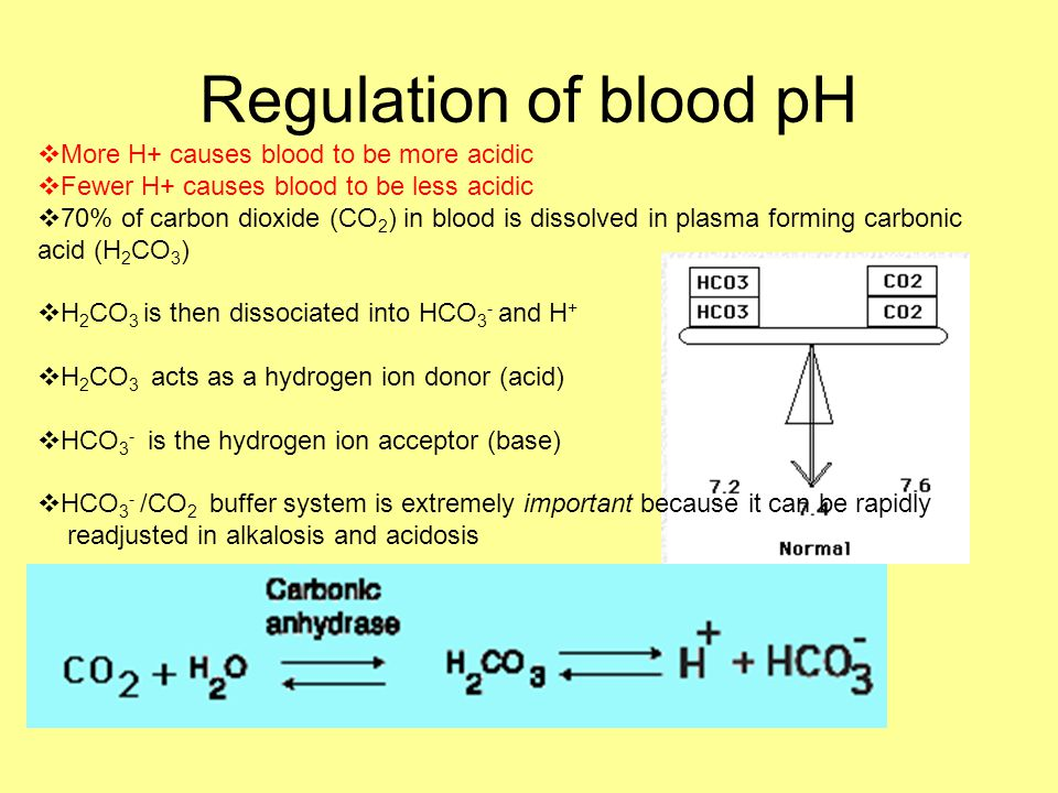 Regulation of blood pH  More H+ causes blood to be more acidic  Fewer H+ causes blood to be less acidic  70% of carbon dioxide (CO 2 ) in blood is