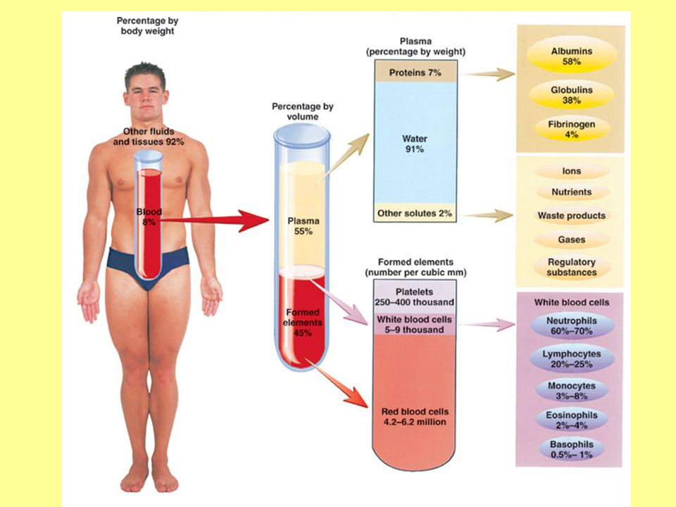 Functions of Blood Transport (Co 2, O 2, waste, nutrients, hormones) Maintenance of body temperature, pH, H 2 O content cells Protection against foreign substances; antibodies Clot formation