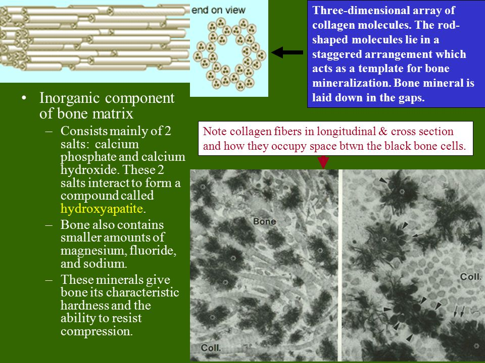 Inorganic component of bone matrix –Consists mainly of 2 salts: calcium phosphate and calcium hydroxide.